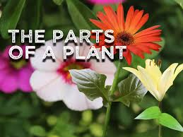 the parts of a plant song for kids about flower stem leaves roots