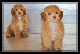 welcome to zoo rama pets home of quality puppies u0026 aquatics