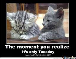 Tuesday Meme - tuesday by trolalalalala meme center