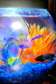 Fish Decor For Home Chinese Water Dragon Aquarium Office Fish Tanks Tank Beta U2013 Golead