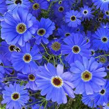 25 best perennial flower seeds images on pinterest flower seeds