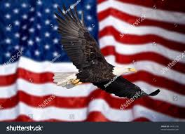 1876 American Flag Bald Eagle Flying With American Flag