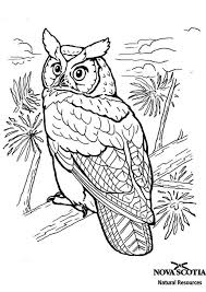 desert owl coloring page desert owl coloring pages clipart library