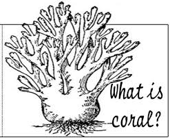 free coral reef coloring page 30570 bestofcoloring com