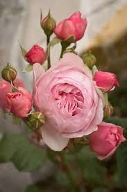 Pinterest Color Schemes by 517 Best Flowers Flores Images On Pinterest Color Schemes