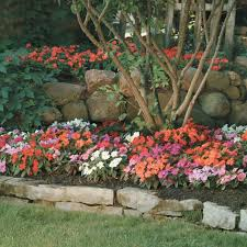 impatiens flowers mixed new guinea impatiens flower seeds veseys