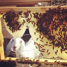 beekeeping like a is it safe to have a beehive if you have a dog