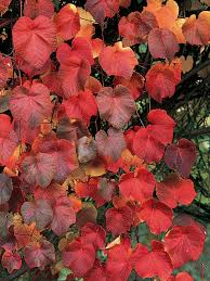 how to choose seasonal climbing plants hgtv