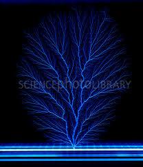 electronic tree photoeditor61