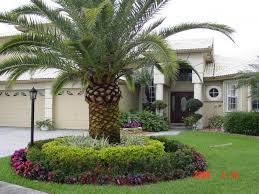 palm trees florida landscaping ideas u2014 jbeedesigns outdoor