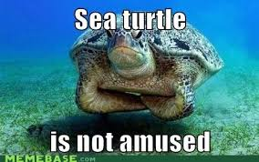 Pissed Off Meme - sea turtle is pissed off meme by i am bear memedroid