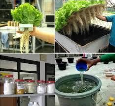 Cara Membuat Cairan Hidroponik | cara membuat nutrisi hidroponik sendiri bibitbunga com