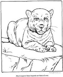 printable zoo animal coloring pages animal coloring pages to print lioness coloring page to print