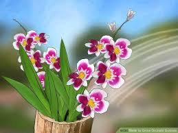 Orchid Plant How To Grow Orchids Outside 8 Steps With Pictures Wikihow