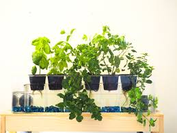 Self Watering Indoor Planters by Aquaponics Garden 6 Planter Aquaponics System Desktop Herb