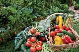 start your own vegetable garden springs advertiser