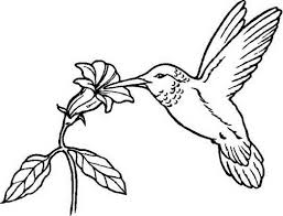 flowers provide nectar for hummingbird eat coloring 491546