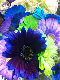 Purple And Blue Flowers Gerbera And Other Daisy Oid Flowers Arnold Zwicky U0027s Blog
