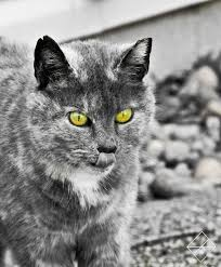 some selective color stuff and a cat by kaiju4u on deviantart