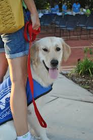 guide dog harness best 25 guide dog training ideas on pinterest puppy facts