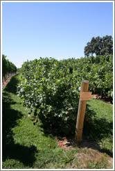 Trellis System Photo Search