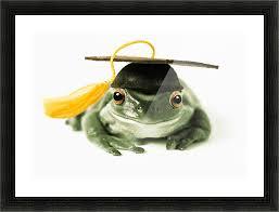 graduation cap frame fv3541 moments photography frog in graduation cap