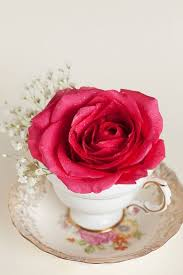roses teacups 85 best beauty in a cup images on flowers tea time