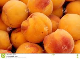 prunus persica yellow cling peach stock photo image 77747717