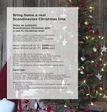 bring home a real scandinavian christmas tree ikea