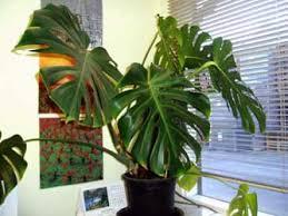 plants indoors indoor plants