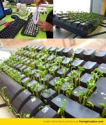plants for office desk grow plants on your office desk funny pictures