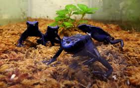 5 tips for breeding dart frogs helping you connect with nature