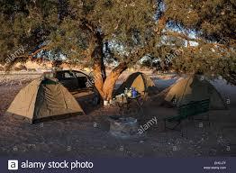 camel tents tents a camel tree vachellia erioloba in sesriem