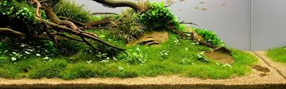 Substrate Aquascape Aquascape Substrate Images Reverse Search