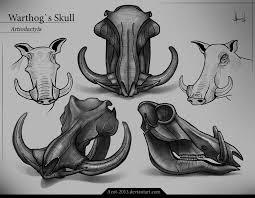 halo warthog drawing warthog s skull by azot2017 on deviantart