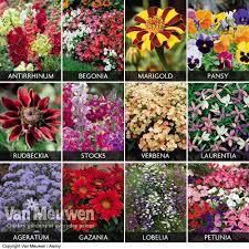 Fragrant Bedding Plants Summer Bedding Collection Van Meuwen
