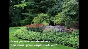 outdoor u0026 garden design nice pachysandra terminalis for garden