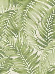 images of palm frond wallpaper sc