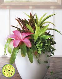Indoor House Plant Create Eye Catching Indoor Container Gardens