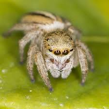 Sad Spider Meme - best of the face of pain i haven t seen a face this sad since my