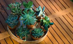succulent arrangements 5 easy steps to creating a beautiful succulent arrangement