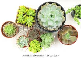 house plants stock images royalty free images u0026 vectors