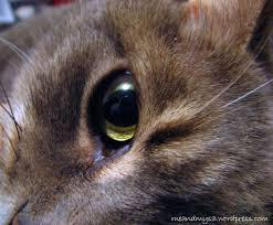 cat u0027s eye me and my s3