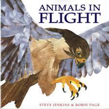 animals in flight cornell lab of ornithology birdsleuth k 12