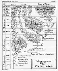 palaeos systematics the phylogenetic tree haeckel u0027s trees