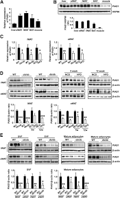 protein inhibitor of activated stat 1 pias1 protects against