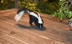 skunk animal services