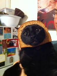 Cat In Bread Meme - cat breading neatorama