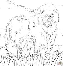 hibernating bear coloring page contegri com