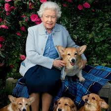 queen elizabeth dog queen elizabeth s corgi died popsugar australia love sex
